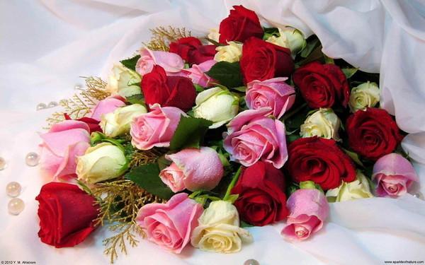 О розах